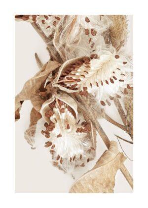 Dry Milkweed Poster